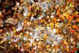 Glitter Chunks Holographic Henry - Large Image